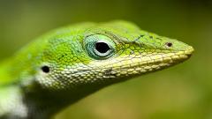 Deuxième Exposition sur les reptiles