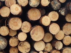 Industrie forestière