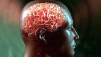 cerveau-homme