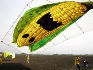 Greenpeace manifeste contre le maïs OGM