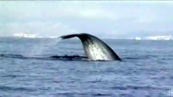 baleine-fleuve
