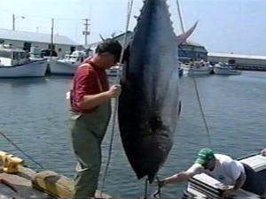 Pêche au thon rouge à l'Île-du-Prince-Édouard
