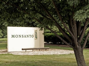 Monsanto sur la sellette