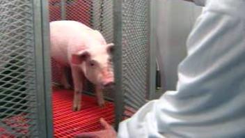 AccelLAB teste des implants cardio-vasculaires et orthopédiques sur des animaux pour des fabricants du monde entier.