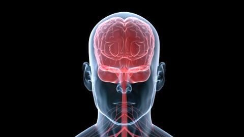 Les mouvements en miroir expliqu s ici radio for Le cerveau en miroir