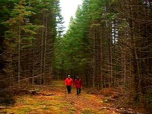 Forêt en Gaspésie
