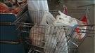 Bannir les sacs de plastique en Abitibi-Témiscamingue (2015-12-12)