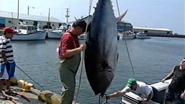Pêcheurs de thons