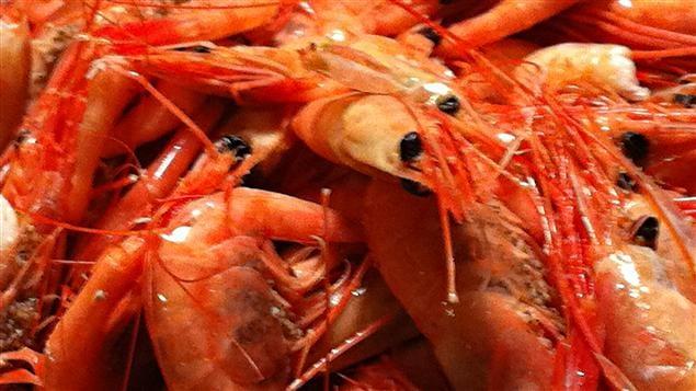 Crevettes-nordiques