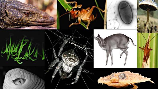 Les 10 espèces figurant au sommet du classement des espèces découvertes en 2010