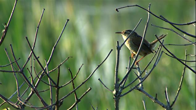 Près de 300 espèces d'oiseaux sont répertoriés dans l'Atlas des oiseaux nicheurs