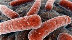 Superbactéries : la crainte d'une ère «post-antibiotiques»
