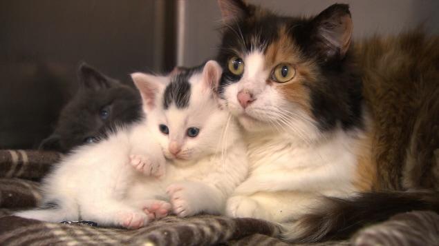 Une chatte et son chaton