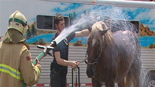 Les pompiers sont venus arroser le cheval, qui avait très chaud après l'incident