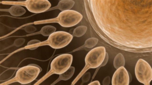 Comment faire des spermatozoïdes