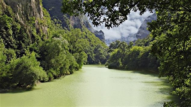 La forêt amazonienne au Brésil