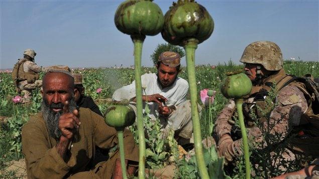 Un militaire américain spécialiste de la lutte antidrogue interroge des cultivateurs de pavot dans le Helmand.