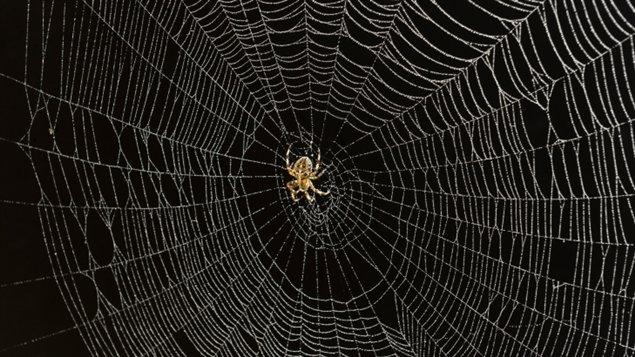 Résultats de recherche d'images pour «toile d'araignée»