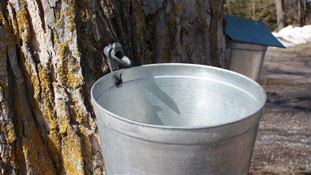 Chaudière pour récolter l'eau d'érable ©JoanieLavoie