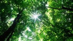 Un été calme en matière de feux de forêts au Bas-Saint-Laurent et en Gaspésie