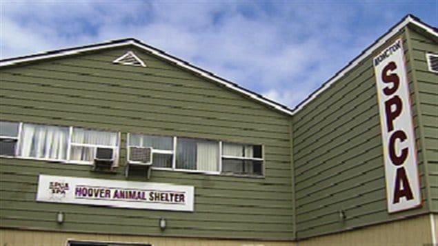 Le refuge de la SPCA à Moncton