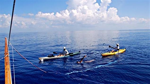 Diana Nyad entre Cuba et la Floride