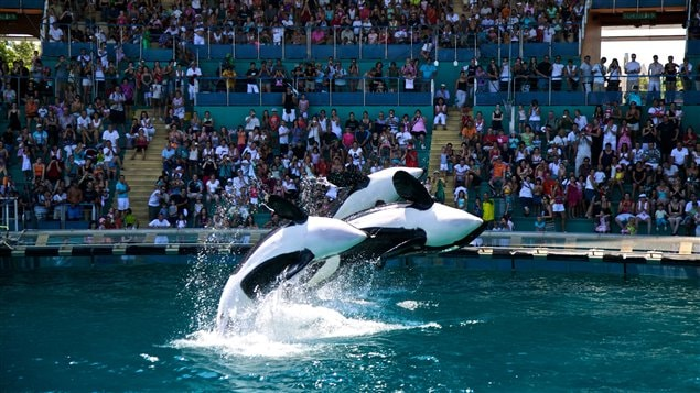 1000  images about Marine Land on Pinterest | To be, Canada and ...