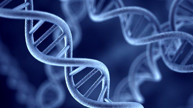 La double hélice de l'ADN