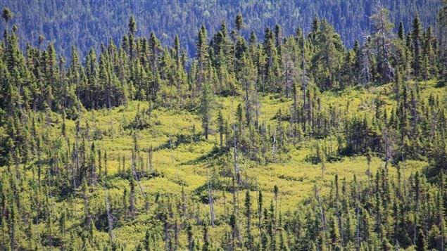 Forêt boréale sur la Côte-Nord