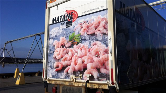 Camion de transport de la crevette au port de Matane