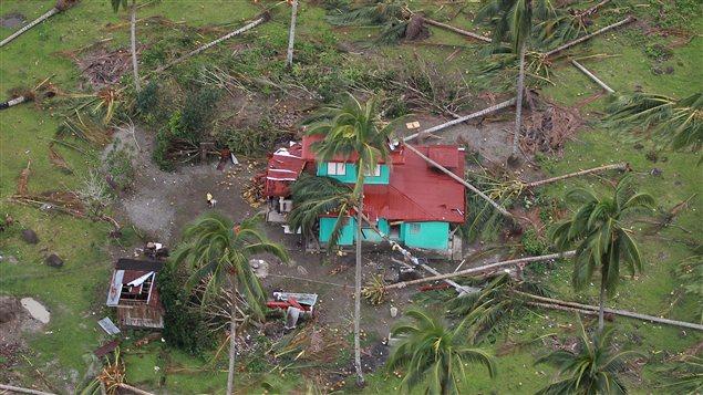 Des cocotiers n'ont pas résisté aux intempéries causés par le typhon Bopha, dans le sud des Philippines