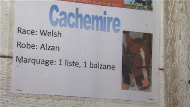 Le cheval décédé, Cachemire