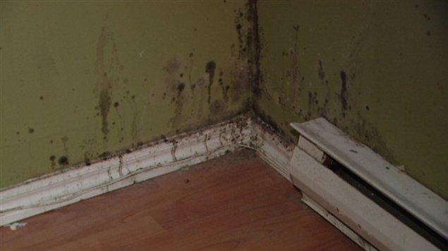 La moisissure était bien visible dans le logement, vendredi, lors d'une conférence de presse de Logemen'occupe.