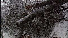De nombreux arbres cassés bloquent les routes.