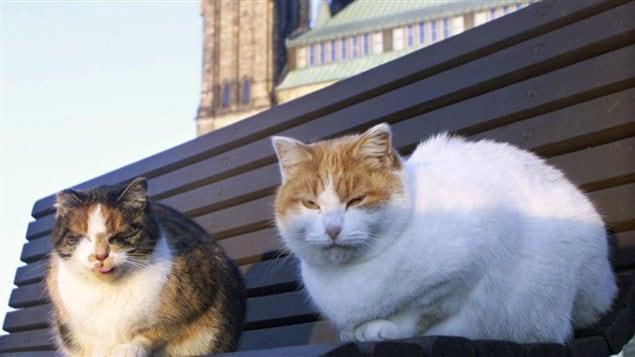 Deux des derniers résidents du sanctuaire pour chats du Parlement, à Ottawa