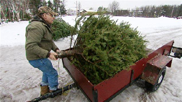 Recyclage de sapins de Noël
