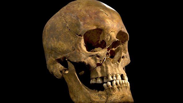 Photo du crâne du squelette retrouvé lors de recherches archéologiques à Leicester, au Royaume-Uni, et qui pourrait être celui du Roi Richard III, qui règna sur l'Angleterre de 1483 à sa mort en 1485.