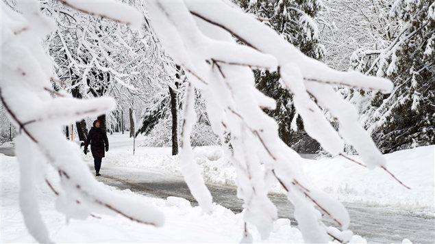 Plusieurs branches d'arbres ont cédé sous le poids de la neige.