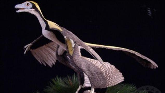 Représentation d'un oiseau primitif à quatre ailes
