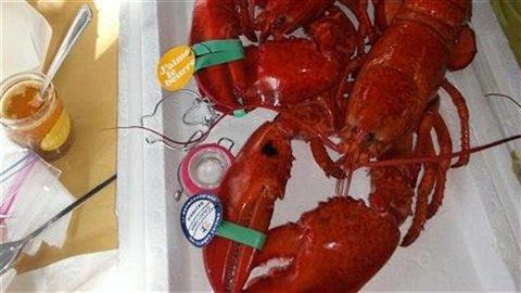 Le médaillon attaché à la sert à identifier la provenance du homard et du pêcheur