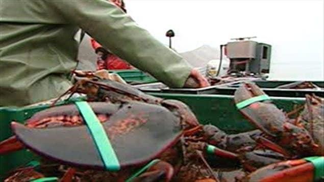 Pêche au homard
