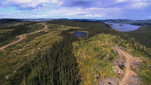 Forêt boréale - Industrie forestière