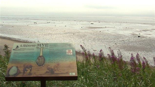 La création d'une aire marine protégée à Pointe-aux-Outardes compromise - ICI.Radio-Canada.ca