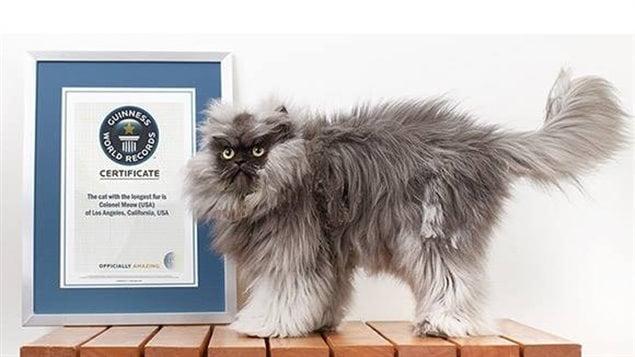 Le chat Colonel Meow