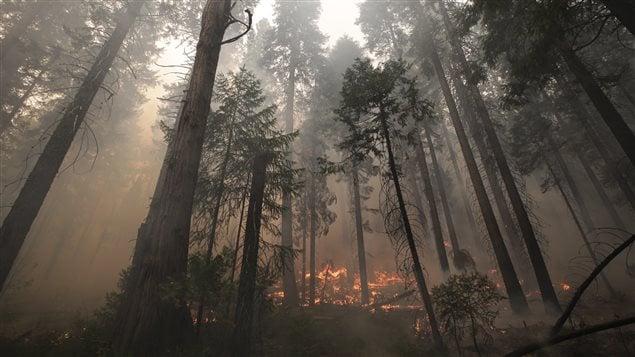 Un important incendie de forêt ravage la Californie depuis près de deux semaines.