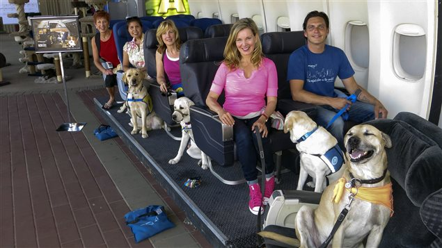Un studio d'Hollywood apprend aux chiens à bien se comporter en avion