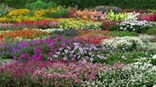 Un v ritable jardin botanique qu bec ici radio for Amis jardin botanique