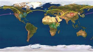 La migration humaine