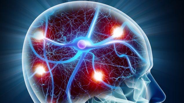 Représentation de neurones dans le cerveau
