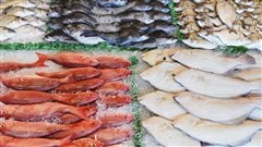 La pêche durable, comment choisir votre poisson